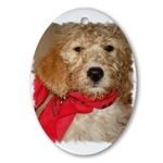 Goldendoodle Christmas Cards