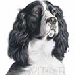 English Springer Spaniel Gifts