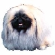 Pekingese Christmas Cards